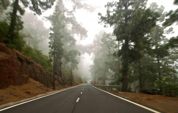 Bosques del Parque Nacional