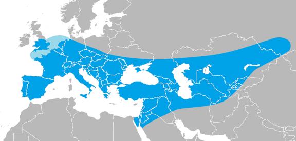 Área de expansión del Neandertal copia