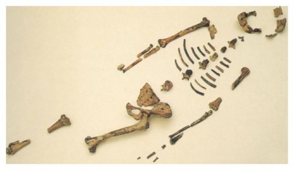 Lucy - esqueleto - antropología