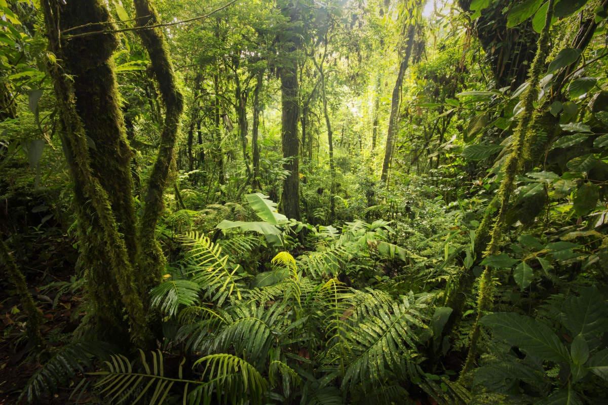 safari-selva-tropical